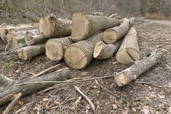 cutten les bois dans la forêt image libre de droits