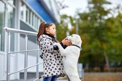 A cuttie dog playing with owner outdoors. Animal concept. Funny doggie walking with owner in the park. Pet with girl outdoors on a natural background. Close-up Royalty Free Stock Image