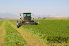 Cutting alfalfa. Combine harvester cutting a field of Alfalfa on central California on a summers day Royalty Free Stock Image
