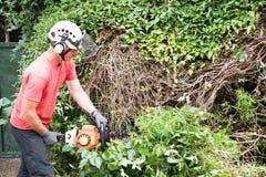 Free Cutting Back An Overgrown Bush Stock Photos - 122369233