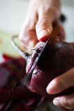 Cutting beet. Professional chef cutting beet-root stock photography