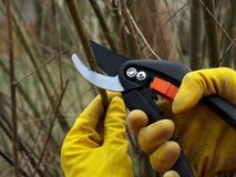 Cutting branches, close up stock photography