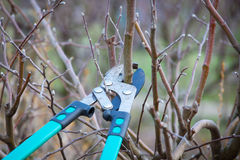 Cutting branches Stock Photo