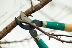 Cutting branches from tree with scissors Stock Photography