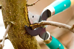 Cutting branches from tree with scissors Stock Photos