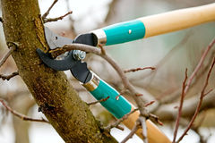 Cutting branches from tree with scissors Royalty Free Stock Photos