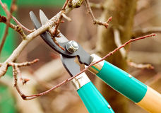 Cutting branches from tree with scissors Stock Images