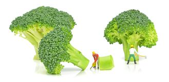 Cutting Broccoli Royalty Free Stock Photo