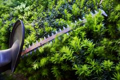 Cutting bushes with an electric hedge trimmer Stock Photos