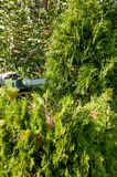 Cutting bushes / trimming the bushes Stock Image