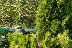 Cutting bushes / trimming the bushes Stock Images