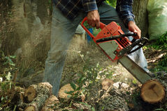 Cutting with chainsaw. Details of cutting with chainsaw and sa dust Stock Image