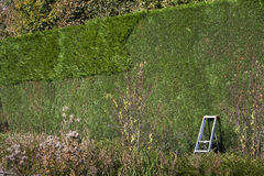 Cutting the conifer hedge Stock Photo