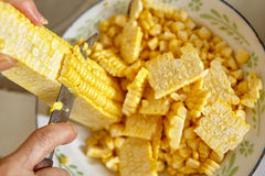 Cutting corn Royalty Free Stock Images