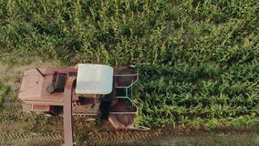 Cutting corn silage with a self-propelled machine and filling a tractor trailer with crushed material in Sunny evening