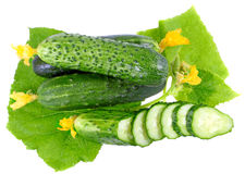 Cutting cucumbers with yellow blossom cluster. Royalty Free Stock Photos
