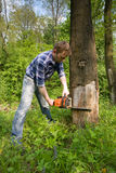 Cutting dead tree. Young worker cutting old dead tree stock image