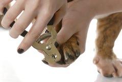 Cutting dog toenails Stock Photo
