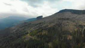 Environmental problem, illegal deforestation in the Carpathians