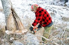 Cutting down trees Stock Photos
