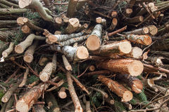 Cutting down trees Royalty Free Stock Photography