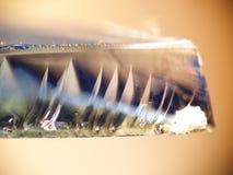 Cutting Edge. Macro of a shard of broken glass Stock Photos