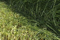 Cutting edge from cut and uncut grass in meadow Royalty Free Stock Photography