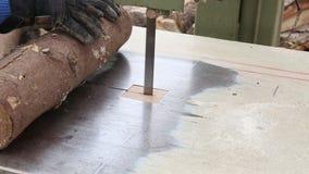 Cutting fir wood Stock Image