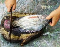 Cutting fish. For cooking in Thailand Royalty Free Stock Photos