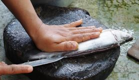 Cutting fish. For cooking in Thailand Royalty Free Stock Photo