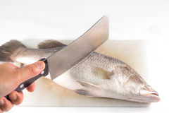 Cutting fish with a knife on cutting board. Cutting fish with a knife on cutting board isolated on white background Royalty Free Stock Photos