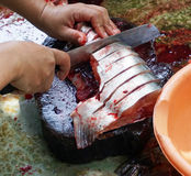 Cutting fish. Cutting Pangasius fish for cooking in Thailand Royalty Free Stock Photo