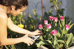 Cutting flowers Stock Image