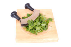 Cutting fresh cilantro Royalty Free Stock Images