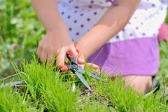 Cutting fresh grass with a pair of scissors Stock Images