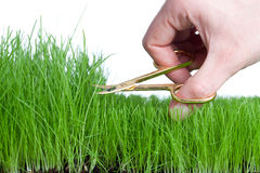Cutting the Grass Stock Images