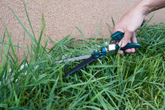 Cutting grass Stock Photo