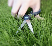 Cutting the grass with a pair of scissors Stock Photo