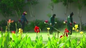 Cutting grass. By petrol trimmer, rack focus stock video