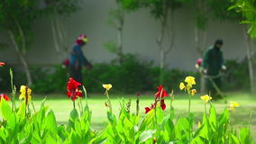 Cutting grass. By petrol trimmer, rack focus stock footage