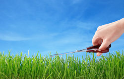 Cutting grass with scissors Royalty Free Stock Photos