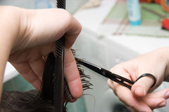 Cutting hair. Hair cutting: hair stylist at work with scissors stock photo