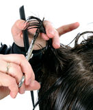 Cutting hair woman. Stock Photography