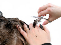 Cutting hair woman. Royalty Free Stock Photo