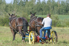 Cutting hay 3. A farmer with a team of horses works a field in rural Alberta, Canada cutting hay Stock Photo