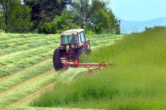 Cutting Hay in Tennessee. Farmer cuts hay in a field in Tennessee.  Hay is lush and green and lays over in rows after being cut Stock Photography