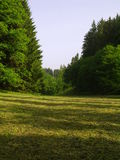 Cutting hayfield in forest. Summer time in Czech republic Royalty Free Stock Images