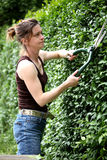 Cutting the hedge Stock Image