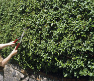 Cutting hedge Stock Images