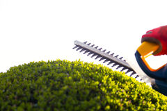 Cutting a hedge with electrical hedge trimmer. Stock Images